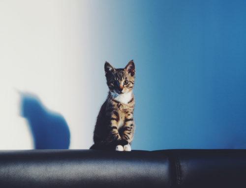 El estrés en los gatos: causas, síntomas y tratamiento