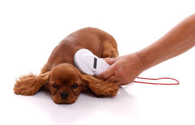 perros microchip