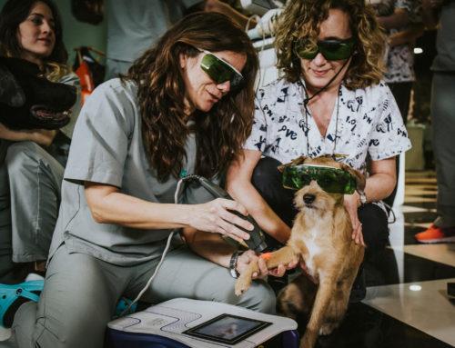 La fisioterapia veterinaria: una alternativa real