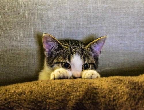 Las gatos también se resfrian
