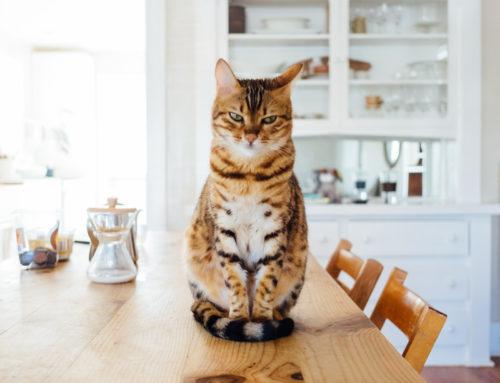 50 datos interesantes sobre los gatos