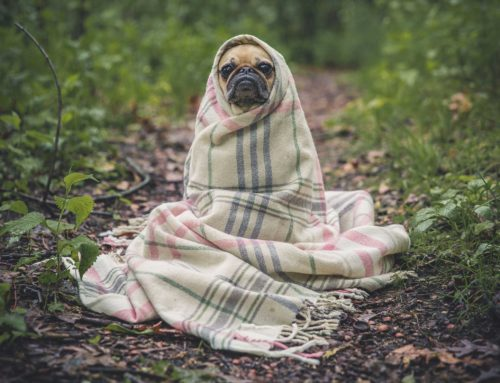 ¿Nuestras mascotas pueden tener frío?