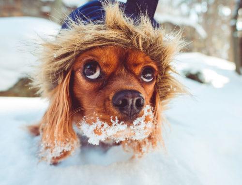 La nieve y los perros