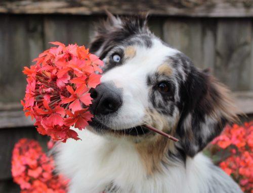 La primavera… ¡a mi perro altera!