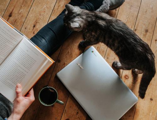 Feromonas felinas: qué son y para qué se usan