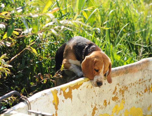 Los perros y las temidas garrapatas: lo que debes saber
