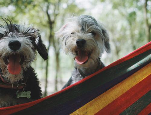 El hipo en perros y gatos