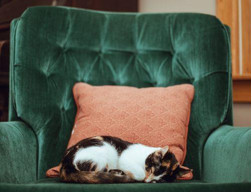 Cuidados especiales en gatos y perros mayores