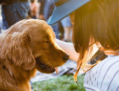 Consejos a tener en cuenta antes de aumentar la familia con una mascota