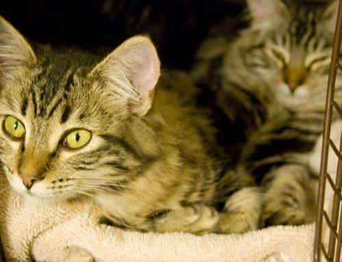 Viajar en coche con gatos: misión (no tan) imposible