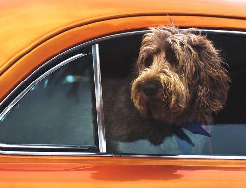 Nunca dejes a tu perro solo en el coche