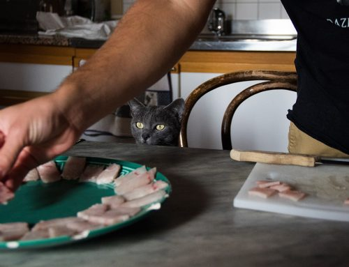 3 recetas para gatos que no podrán rechazar