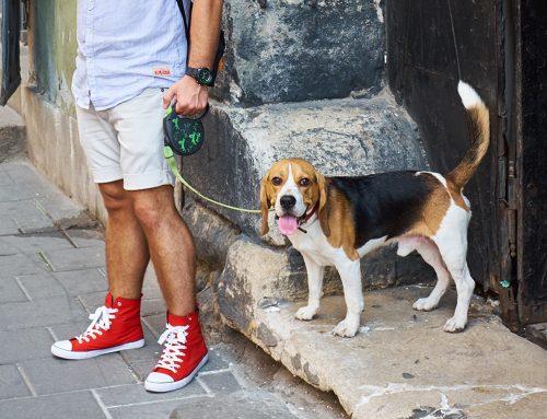 ¿Por qué los perros ladran a algunas personas pero a otras no?