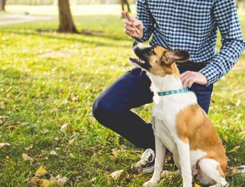 Galletas 100% naturales para perros y gatos