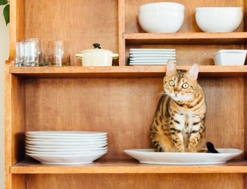 Cómo alimentar correctamente a un gato