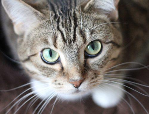 La música que debería de escuchar tu gato