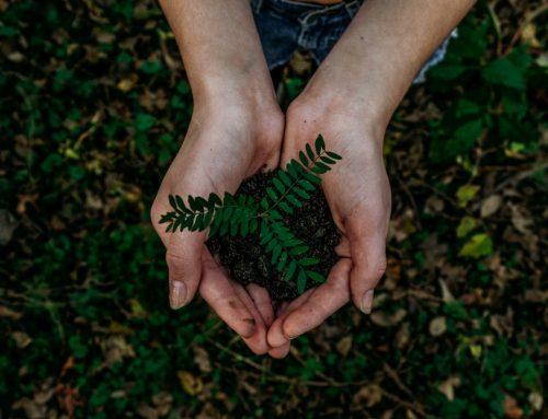 Día Mundial del Medio Ambiente: ¿podríamos ayudar?