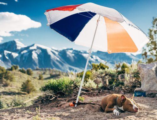 ¿Sabías que los perretes también se queman con el sol?