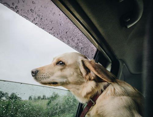¿Estás preparando las vacaciones con tu mascota?