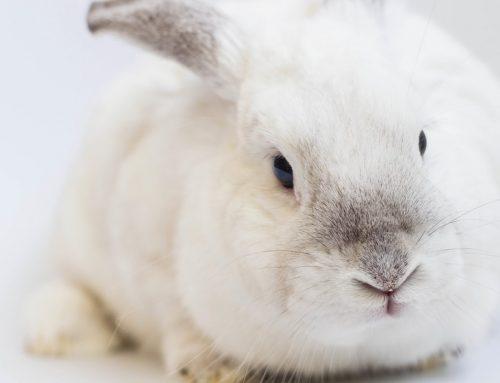 Una alimentación correcta para conejos