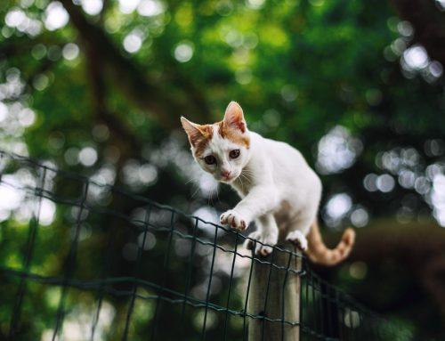 ¿Por qué mi gato se sube a las alturas?