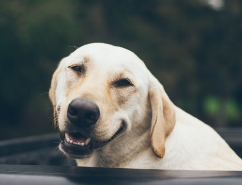 ¿Los perretes sonríen?