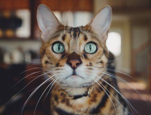 ¿Conoces todas las peculiaridades de tu gato?
