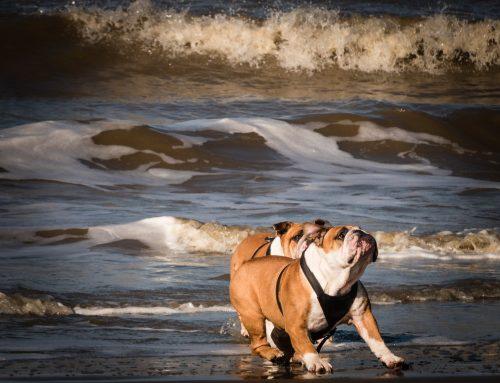 Gijón es una de las ciudades  más Dog-friendly de nuestro país