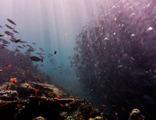 La importancia de los océanos en nuestras vidas