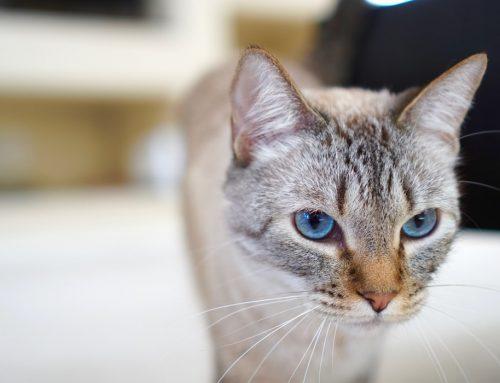 ¿Tu gato no utiliza el arenero y no sabes por qué?
