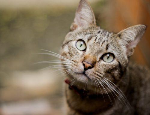 ¿Tu gatín tiene artrosis?