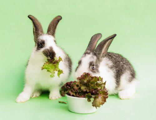 Frutas y vegetales que pueden comer los conejos