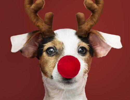 ¿Cómo celebrar las navidades con tu perrín?