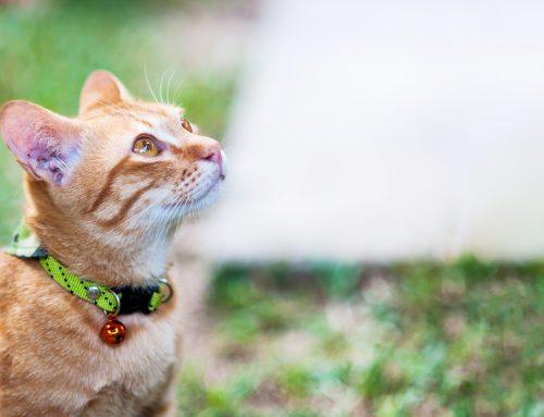 Efectos de la primavera en perros y gatos