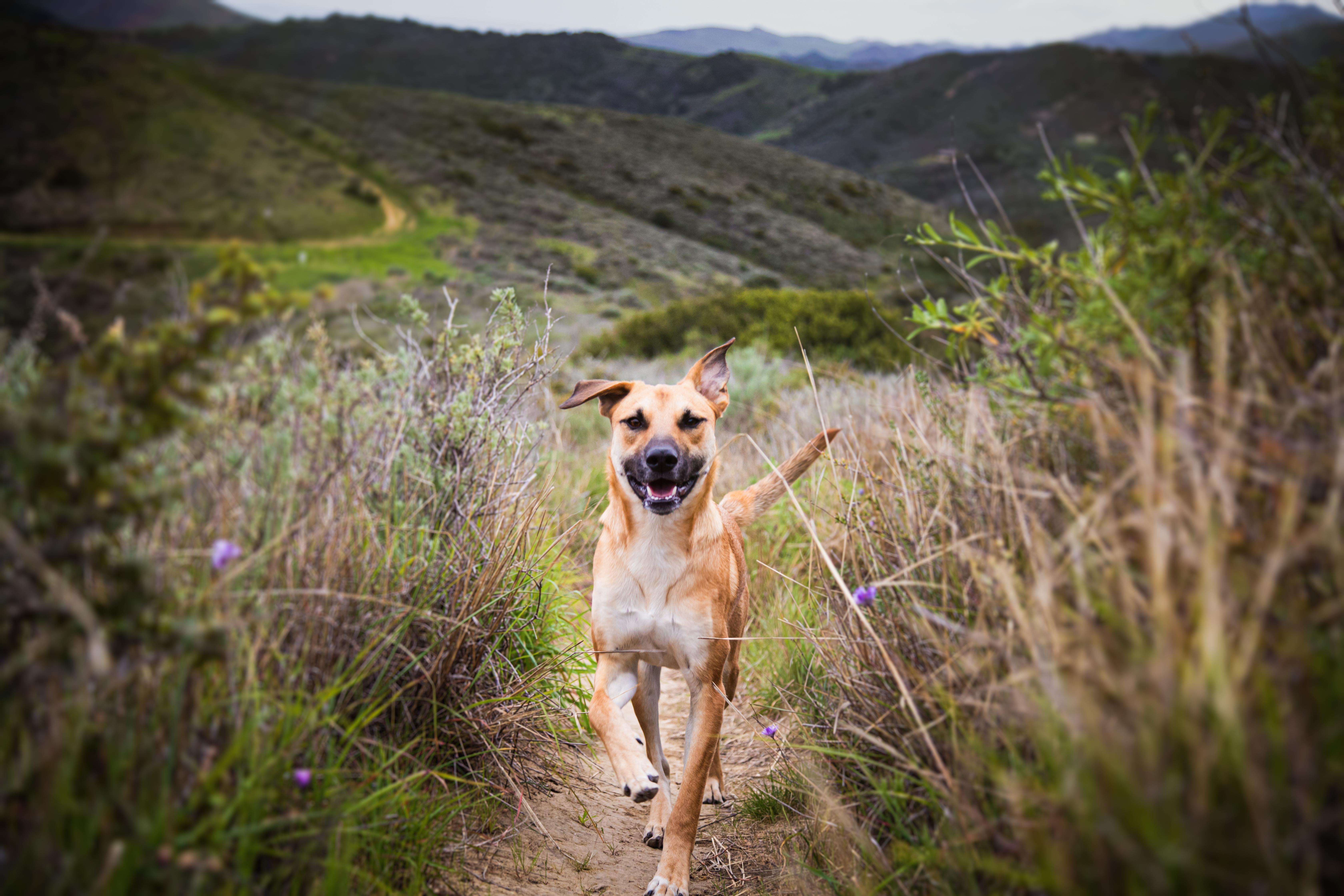 Estreñimiento en perros: síntomas y soluciones