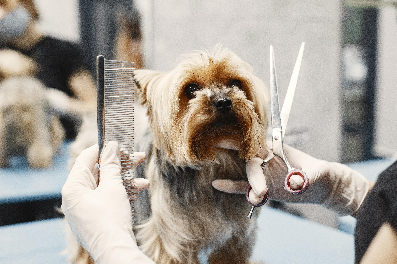 Beneficios de la peluquería canina y felina