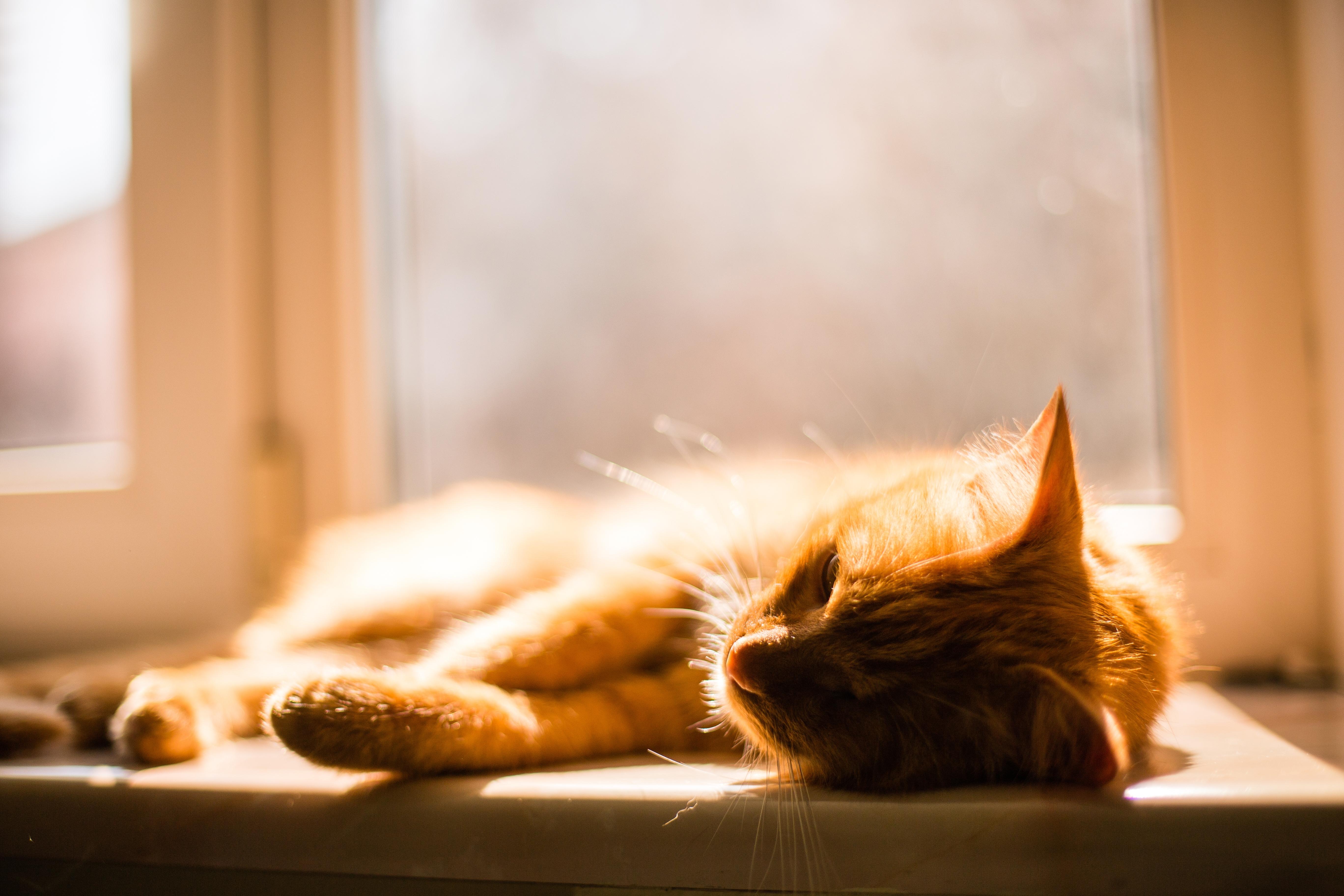 ¿Cómo afecta el sol a los gatos?